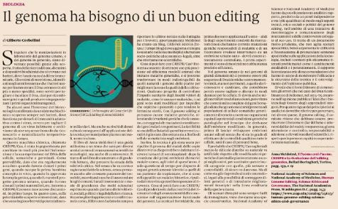 sole 24