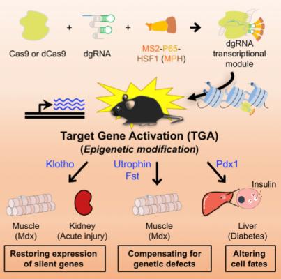 editing epigenetico Cell