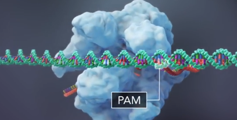 pam sequence