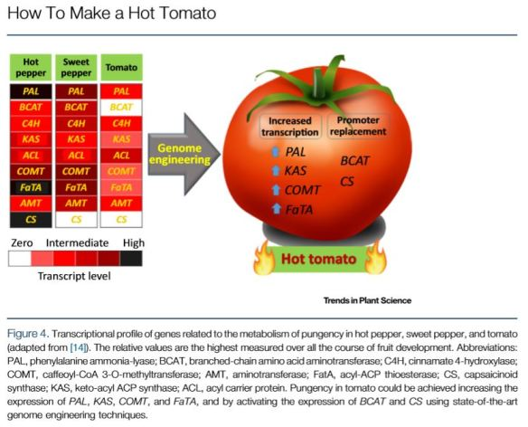 how to make a hot tomato