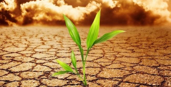 GMO-climate-change