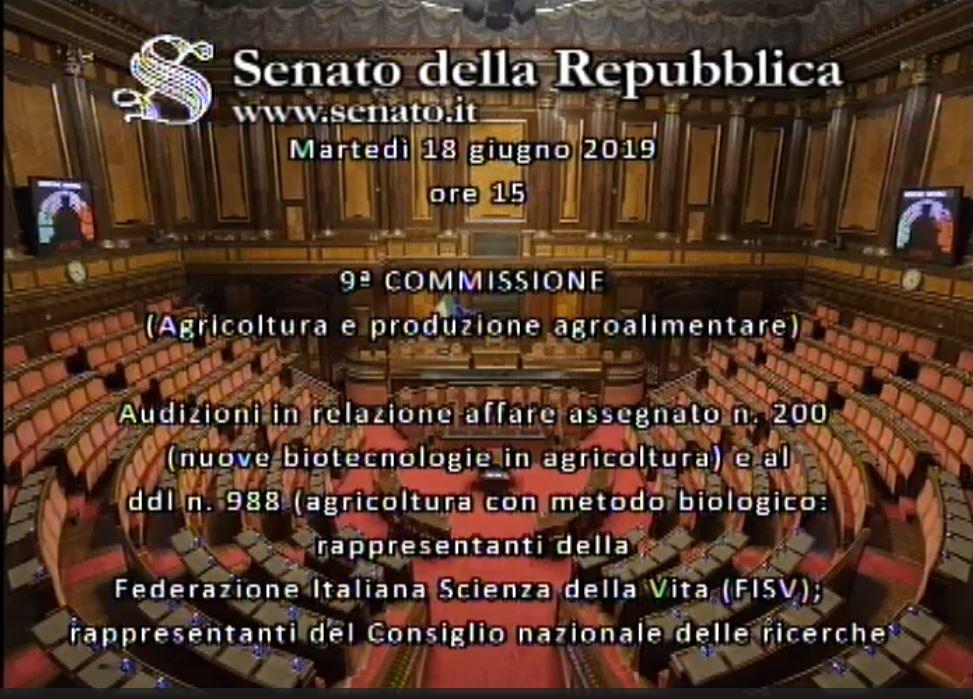 audizioni Senato